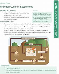 Nitrogen Cycle In Ecosystems Study Guide