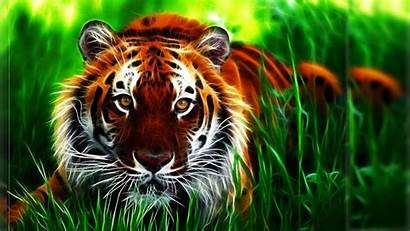 Tiger Wallpapers Cool 3d Wallpapertag
