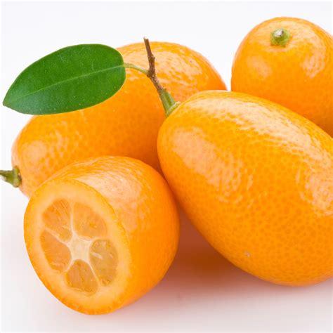 Kumquat Images Crafters Choice Kumquat Fragrance 653 Crafter S Choice