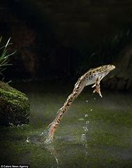 Frog Stop Motion Photography