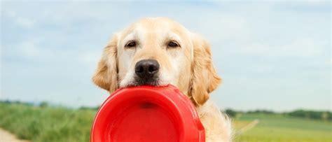 cool tricks  teach  dog vetbabble