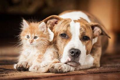 Pets Covid Affect Household Confirmed Staying Sick