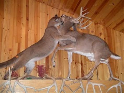 5 deer mounts i d to in my house land hunters