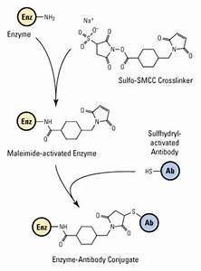 Smcc  Succinimidyl 4