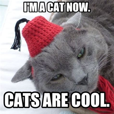 Cat In Suit Meme - 1000 images about nerds united on pinterest steven moffat dr who and tenth doctor