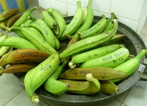 cuisine banane plantain plantain bananas suitability for cooking and nutritional