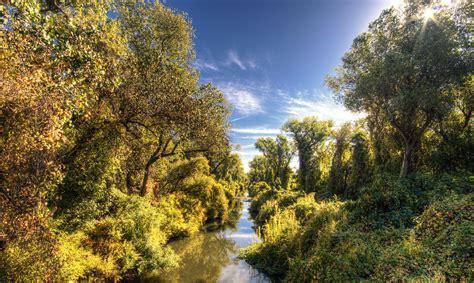 sacramento californias city  trees  california sun