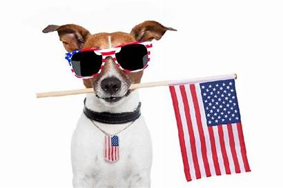 July 4th Animals Dog Animal Fourth Glasses
