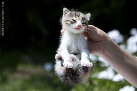 die kleine katze die zu mir passt tipps katzen lieben