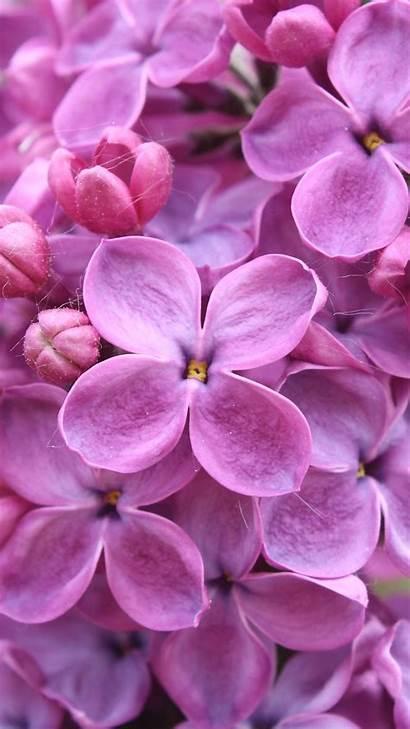 Lilac Purple Flowers Wallpapers Flower 1080 1920
