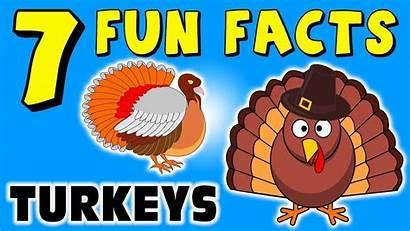 Turkey Facts Thanksgiving Fun Turkeys Funny Puppet