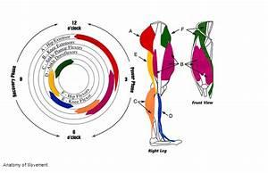 Cycling Biomechanics