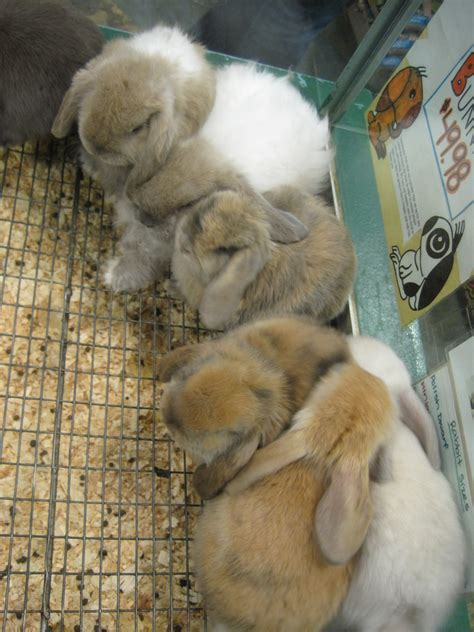 pet shops  sell rabbits cat  dog lovers
