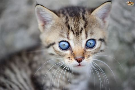 why do kittens blue that change colour later
