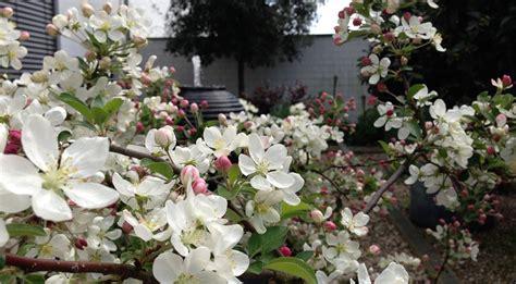 Der Blühende Garten by Impressum Der Bl 252 Hende Garten