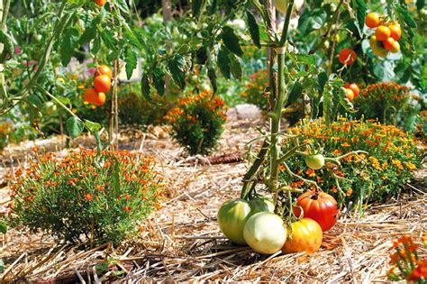 vaisselle de cuisine comment lutter contre les mauvaises herbes dans jardin