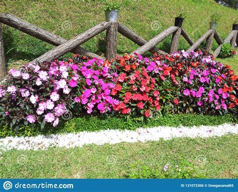 home garden plants  sri lanka  hd wallpapers