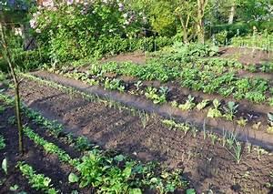 Gemüsegarten Anlegen Beispiele : konkreter gem se anbauplan skizze der beetaufteilung ~ Watch28wear.com Haus und Dekorationen