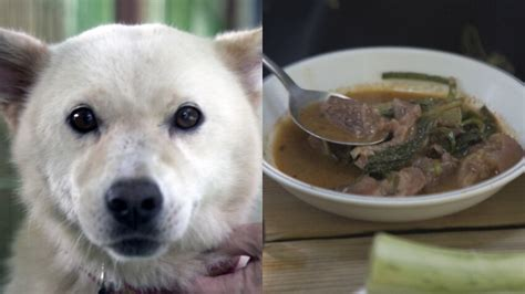 places   world    eat dog meat