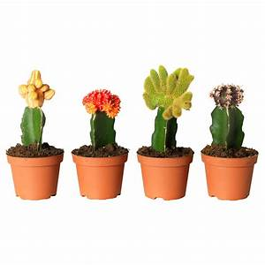 Cactus Plant In Pot | www.pixshark.com - Images Galleries ...