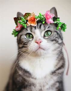 Cat Flower Crown - Pink Coral - SUDDENLY CAT
