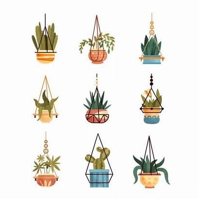Hanging Plant Vector Pot Plants Illustrations Clip