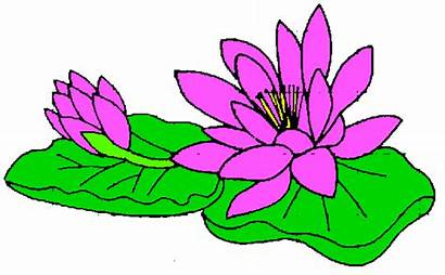 Lily Clip Clipart Water Pad Lilly Flower