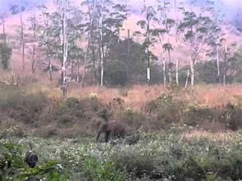 Elephant Attack In Idukki 2013 February Kerala Youtube
