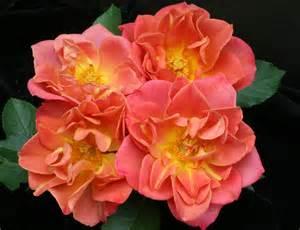 flower press american society