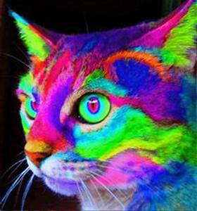 1000 ideas about Every Color The RAINBOW on Pinterest