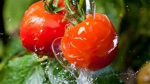 Pferdemist Für Tomaten : hexengebr u hilft bei tomatenkrankheiten rezept ~ Watch28wear.com Haus und Dekorationen