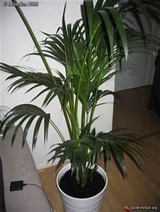Plante De Salon : la plante du salon joelindien les galeries photo de plantes de gardenbreizh ~ Teatrodelosmanantiales.com Idées de Décoration