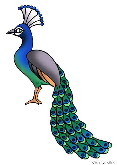 peacock clipart  clipart images image