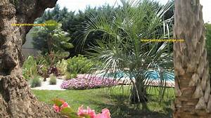 Graine De Gazon Pas Cher : palmiers prestige vente de palmiers et cocotiers d ~ Dailycaller-alerts.com Idées de Décoration