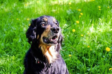 fiori di bach per i cani fiori di bach per cani