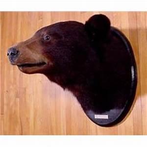Lot 067_: Black Bear Head Mount