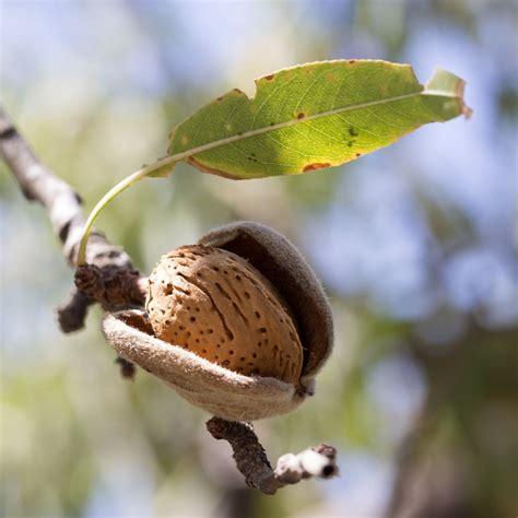 Anspruchslose Garten Pflanzen by Mandelbaum Im Garten Pflanzen Und Pflegen Baumpflegeportal