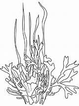 Seaweed Coloring Ocean Drawing Sea Plants Coral Underwater Google Printable Stencils Drawings Line Colors Colouring Cartoon Printables Stencil Template Mycoloring sketch template