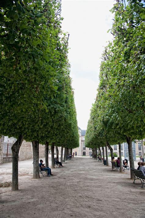 paris trees louis dallara photography