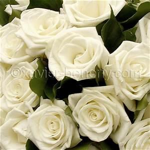 Bouquet Fleurs Blanches : flore fleur vegetaux ~ Premium-room.com Idées de Décoration