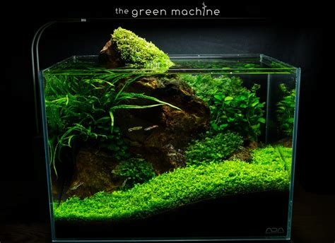Fish For Aquascape - rock aquascape by findley for the green machine
