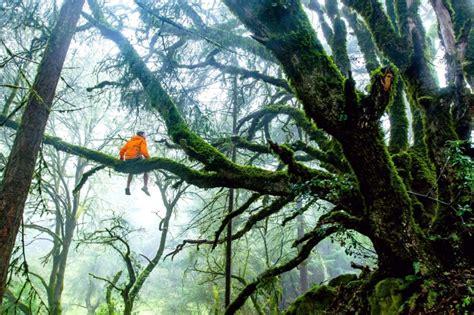 imagen gratis selva tropical arboles madera ramas