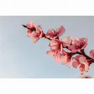 Foto Auf Plexiglas : foto auf plexiglas blumenzweig in verschiedenen gr en erh ltlich ~ Buech-reservation.com Haus und Dekorationen