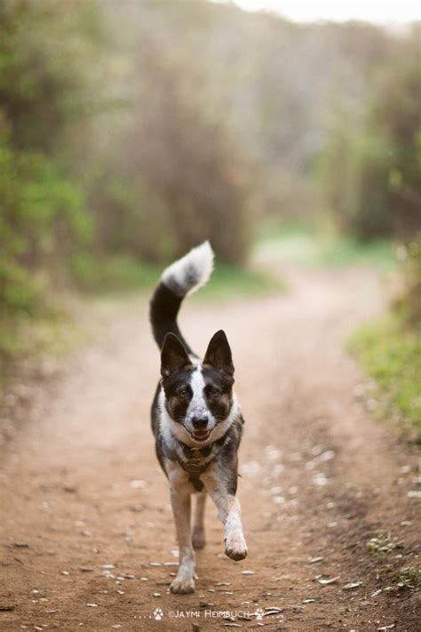photograph dogs  action mnn mother nature network