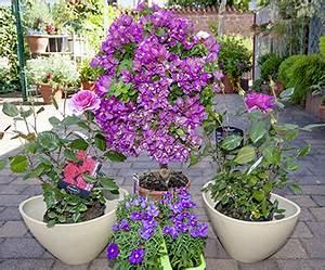 Lang Blühende Pflanzen : stauden balkon pflanzen f r nassen boden ~ Eleganceandgraceweddings.com Haus und Dekorationen