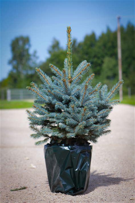 winter friendly plants   outdoor arrangement