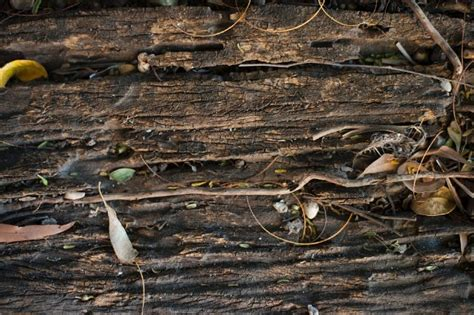 background  rotting wood  backgrounds  textures