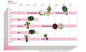 Hochbeet Bepflanzen Im 1 Jahr : einfache mischkultur f r hoch und gartenbeete bioterra biogarten ~ Frokenaadalensverden.com Haus und Dekorationen