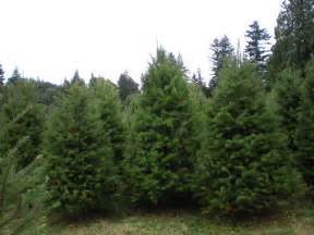 types of trees at our farm mcfee 39 s tree farm