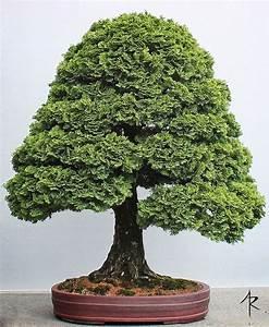 Bonsai Baum Garten : 1321 besten bonsai bilder auf pinterest bonsai ~ Lizthompson.info Haus und Dekorationen